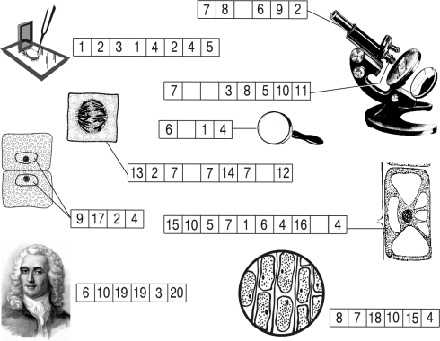 """Криптограмма """"Клетка и увеличительные приборы""""."""