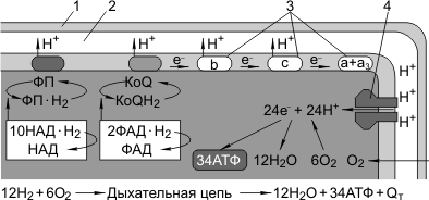 Кислородное окисление