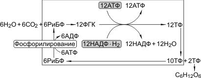 С3-фотосинтез