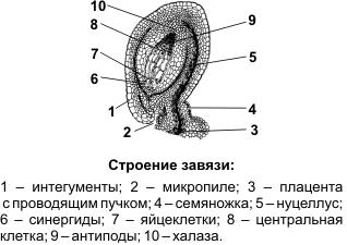 В какой части цветка происходит оплодотворение