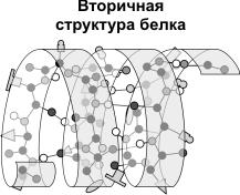 вторичная структура белка
