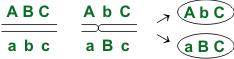 Схема кроссинговера-1
