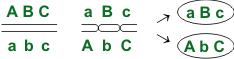 Схема кроссинговера-3