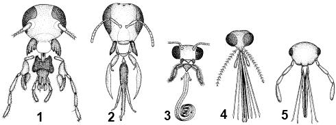 Типы ротовых аппаратов насекомых