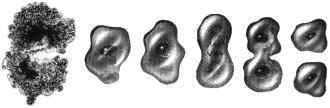 Митотические деление клетки амебы надвое