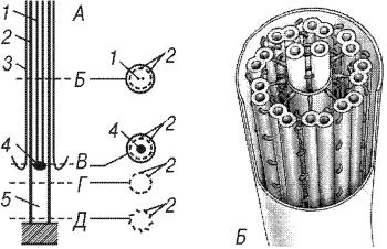 Схема внутреннего строения жгутика