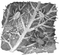 Паутинные клещи на листе огурца
