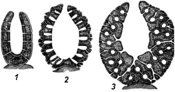 Различные типы строение губок