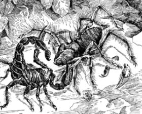 Скорпион и фаланга