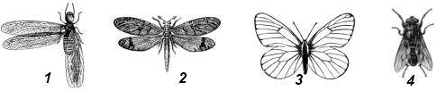 Ротовой аппарат лижущего типа имеется у насекомого...