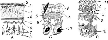 Характеристика типа Плоские черви